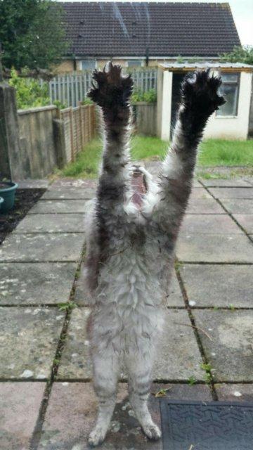 Protestele felinelor: 13 pisici incuiate pe afara, in crize - Poza 8