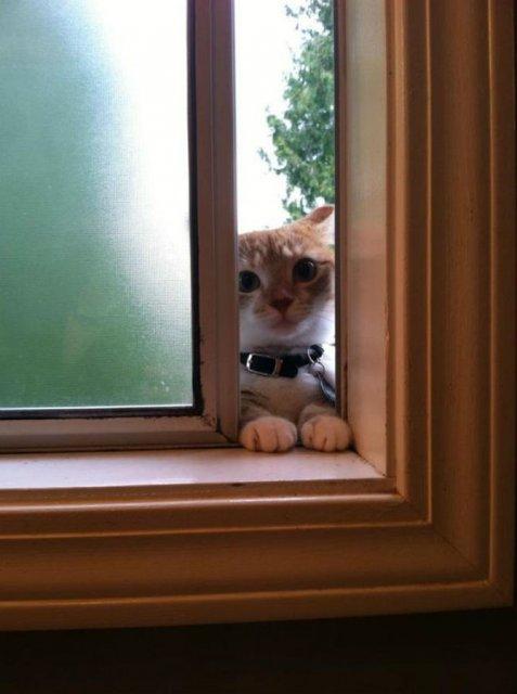 Protestele felinelor: 13 pisici incuiate pe afara, in crize - Poza 9