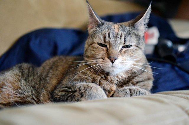 Cele mai batrane pisici adoptate de cei mai inimosi oameni - Poza 1