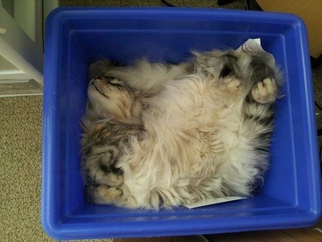 17 Pisici care dorm in cele mai haioase pozitii - Poza 13