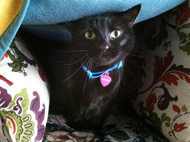 Cele mai batrane pisici adoptate de cei mai inimosi oameni - Poza 2