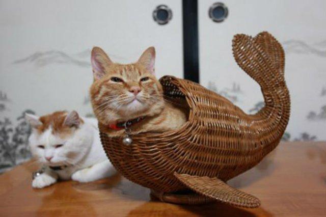 8 poze cu pisici inghesuite prin cele mai ciudate locuri - Poza 1