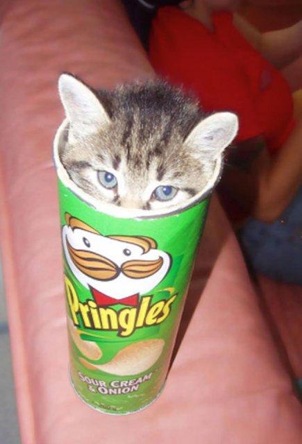 8 poze cu pisici inghesuite prin cele mai ciudate locuri - Poza 2