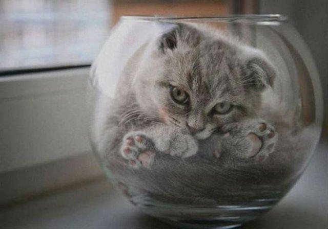 8 poze cu pisici inghesuite prin cele mai ciudate locuri - Poza 3