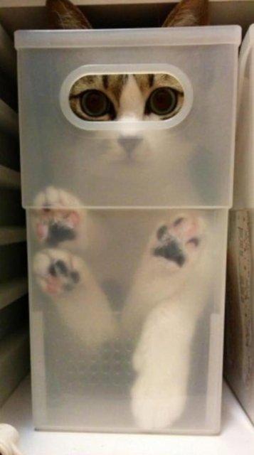 8 poze cu pisici inghesuite prin cele mai ciudate locuri - Poza 4