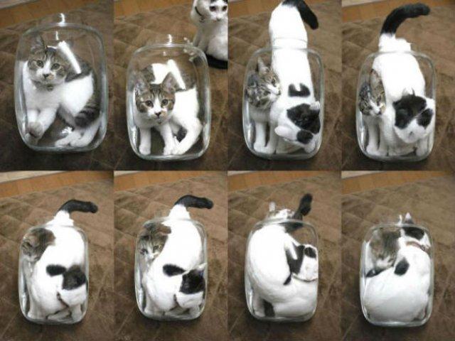 8 poze cu pisici inghesuite prin cele mai ciudate locuri - Poza 5