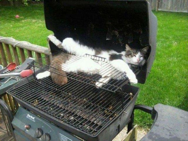 8 poze cu pisici inghesuite prin cele mai ciudate locuri - Poza 6
