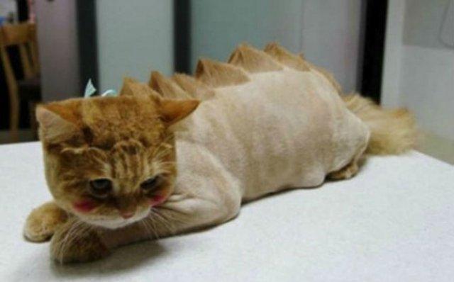 10 pisici tunse in cele mai trasnite feluri - Poza 2