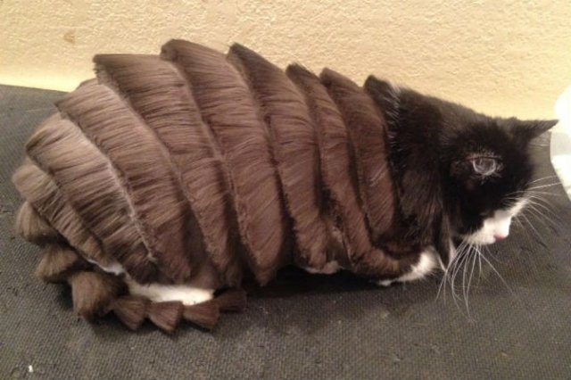 10 pisici tunse in cele mai trasnite feluri - Poza 4