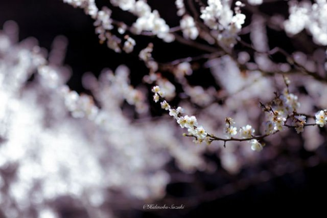 Primavara din Japonia, in cele mai frumoase poze - Poza 9