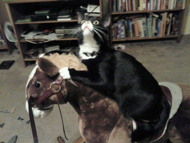 Poze haioase cu pisici neastamparate - Poza 15