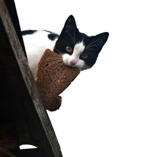 Pisici hoate, prinse in actiune - Poza 14