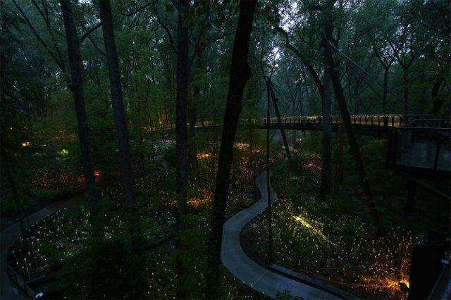 Campul luminii: O experienta luminoasa energizanta - Poza 6
