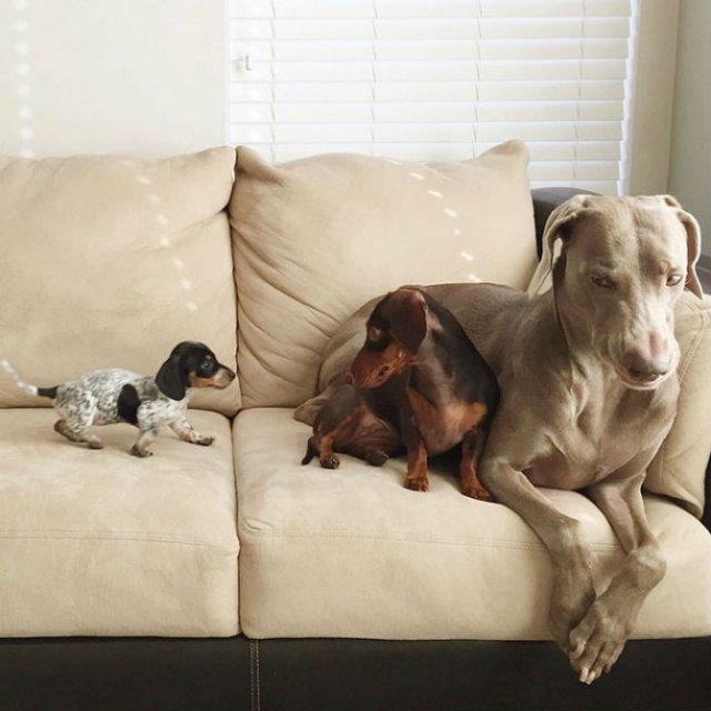 Trei prieteni de nedespartit, in poze adorabile - Poza 1
