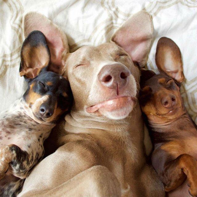 Trei prieteni de nedespartit, in poze adorabile - Poza 2