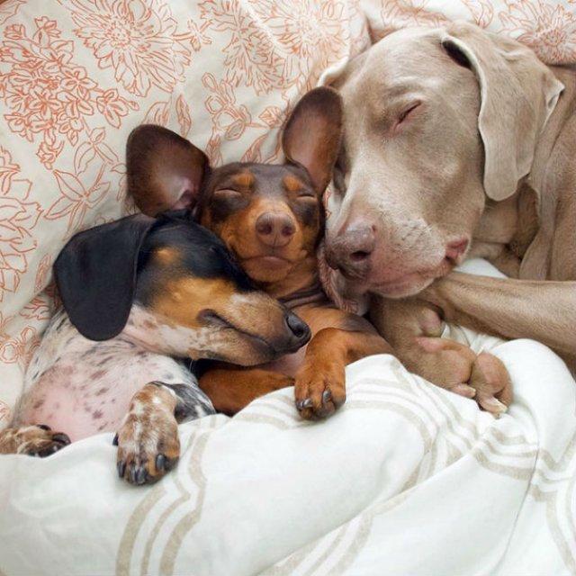 Trei prieteni de nedespartit, in poze adorabile - Poza 4