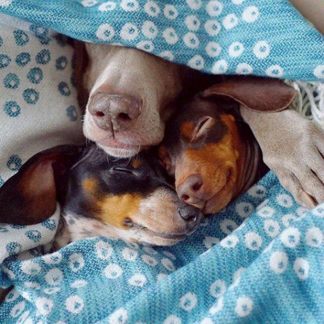 Trei prieteni de nedespartit, in poze adorabile - Poza 8