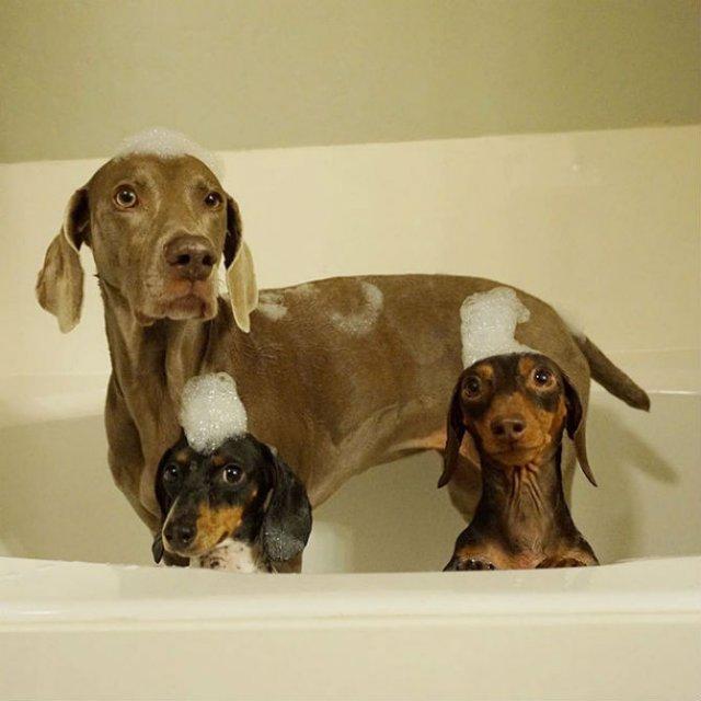 Trei prieteni de nedespartit, in poze adorabile - Poza 9