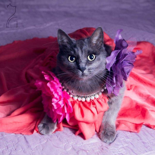Cea mai cocheta pisica, in poze de colectie - Poza 2