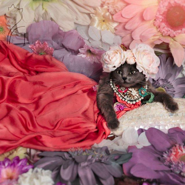 Cea mai cocheta pisica, in poze de colectie - Poza 3
