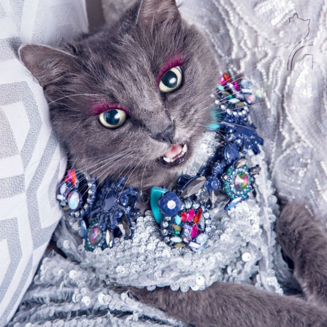 Cea mai cocheta pisica, in poze de colectie - Poza 4