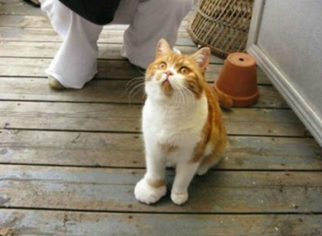 17 Lectii despre pisici pe care le-am invatat de pe internet