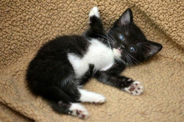 13 Pisicute care iti vor insenina ziua - Poza 9
