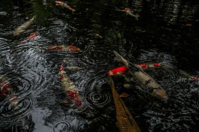 Uimitoarea Japonie, in sezonul ploios - Poza 5