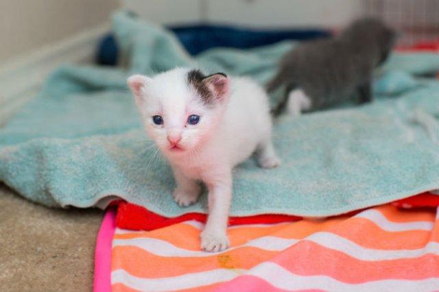 Cei mai simpatici pui de pisica, in cautare de stapan - Poza 7
