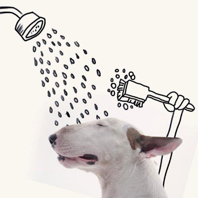 Bull Terrierul Jimmy Choo, intr-un pictorial trasnit - Poza 5