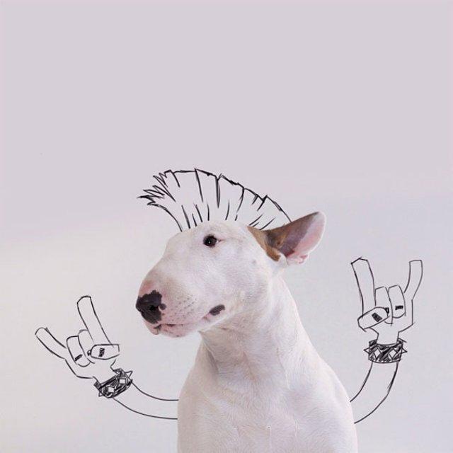 Bull Terrierul Jimmy Choo, intr-un pictorial trasnit - Poza 1