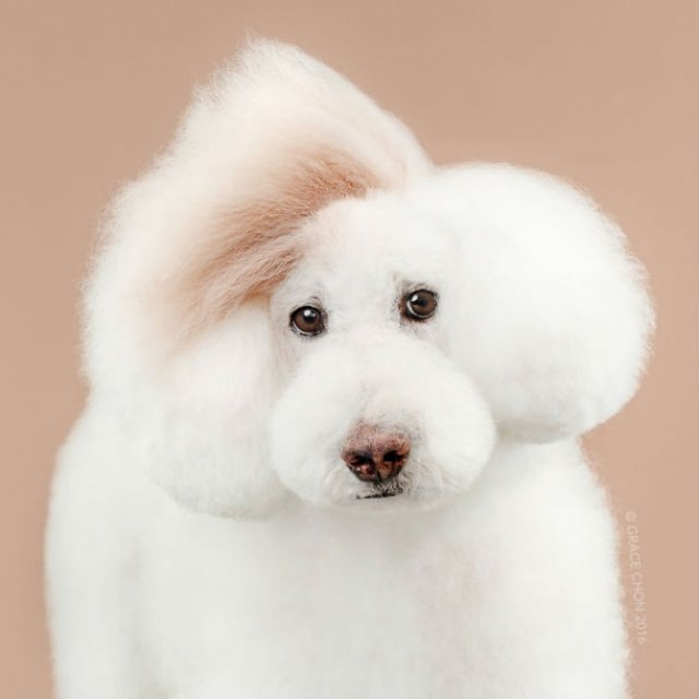 Unul mai cochet ca altul: Tunsori canine cu influente asiatice - Poza 12