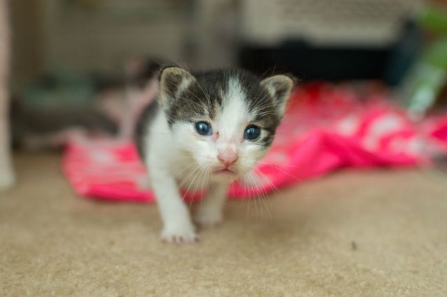 Cei mai simpatici pui de pisica, in cautare de stapan - Poza 6