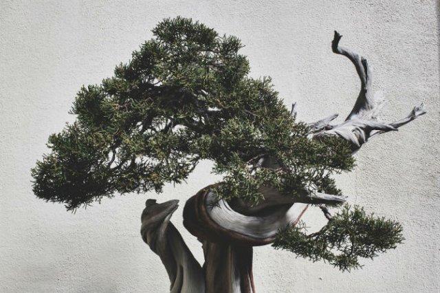 Unicitatea bonsailor, intr-un pictorial superb - Poza 8