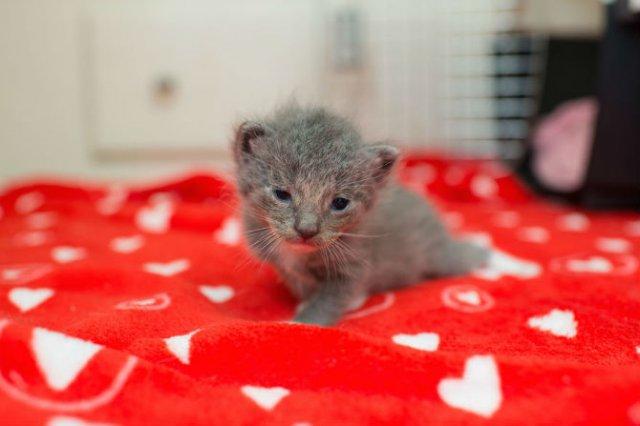 Cei mai simpatici pui de pisica, in cautare de stapan - Poza 3