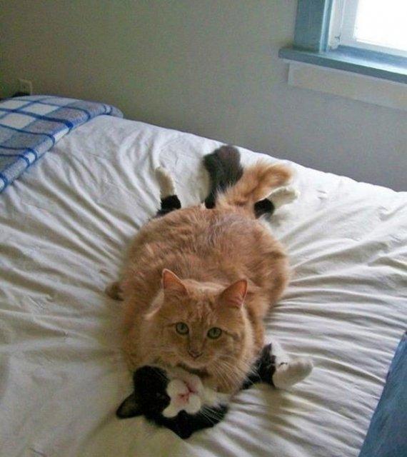 20+ Poze amuzante cu pisici naravase - Poza 9