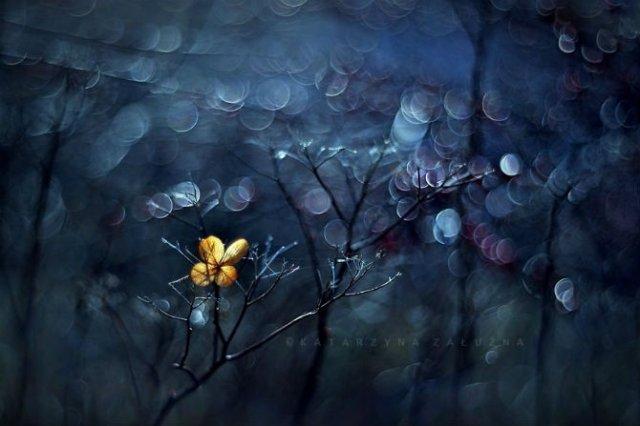 Florile ochilor mei: Picturi din sanul naturii - Poza 14