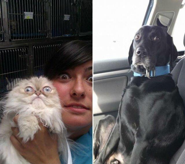 Reactii amuzante ale animalelor, la doctor - Poza 4