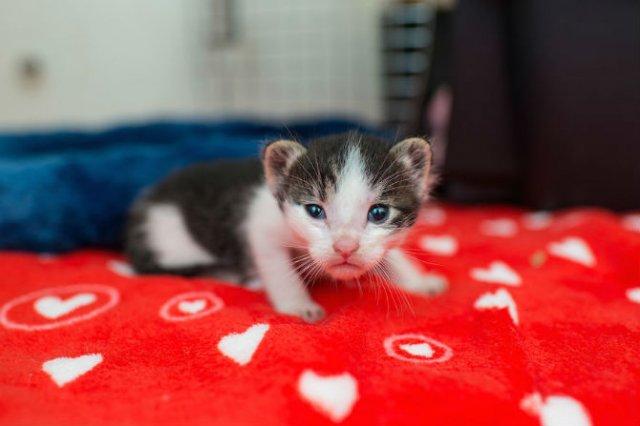 Cei mai simpatici pui de pisica, in cautare de stapan - Poza 1