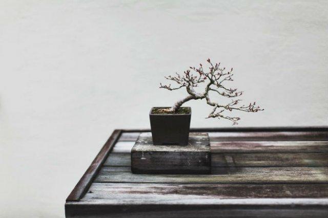Unicitatea bonsailor, intr-un pictorial superb - Poza 5