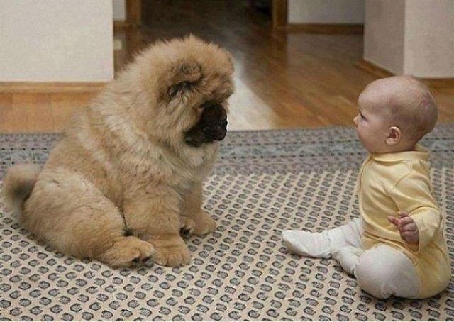 Copii si animale, intr-un pictorial adorabil - Poza 1