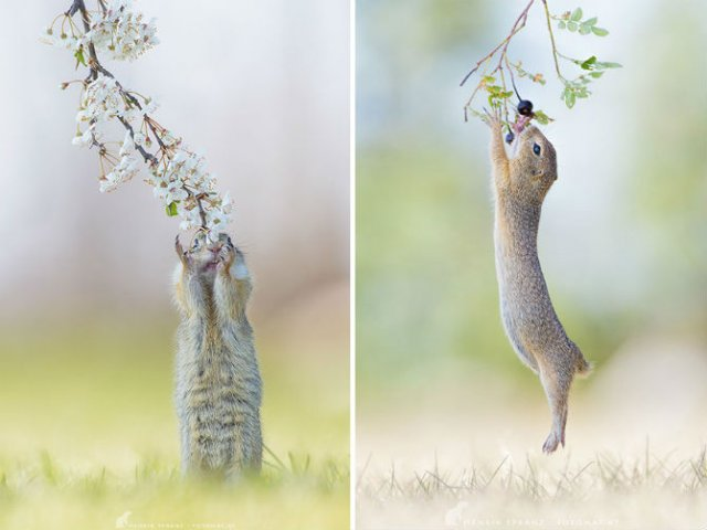 Rozatoare adorabile, intr-un pictorial haios - Poza 17