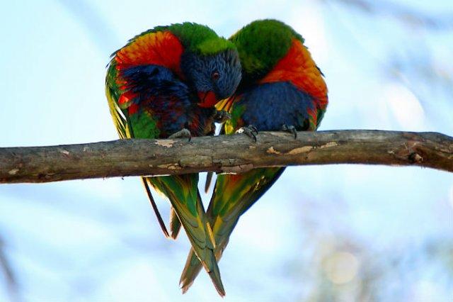 Dragostea pluteste in aer: Tandrete in lumea animala - Poza 1