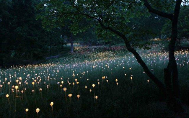 Campul luminii: O experienta luminoasa energizanta - Poza 4