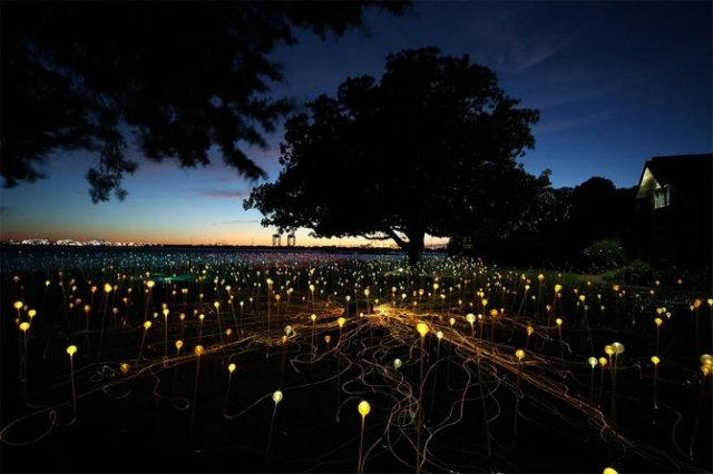 Campul luminii: O experienta luminoasa energizanta - Poza 5
