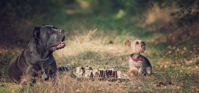 Conexiunea dintre om si animale, in imagini sugestive - Poza 9