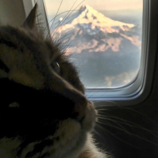 Corduroy, cea mai in varsta pisica din lume - Poza 8