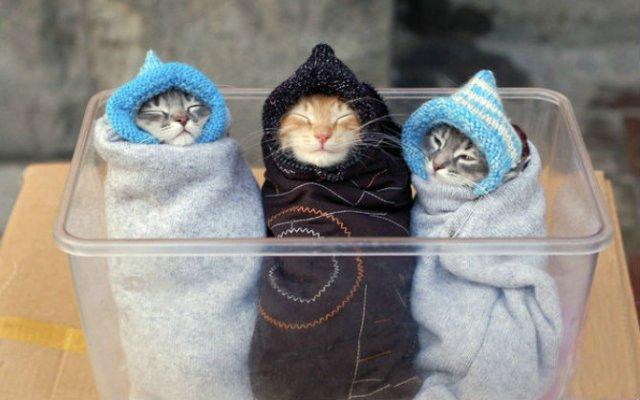 13 Pisicute care iti vor insenina ziua - Poza 1