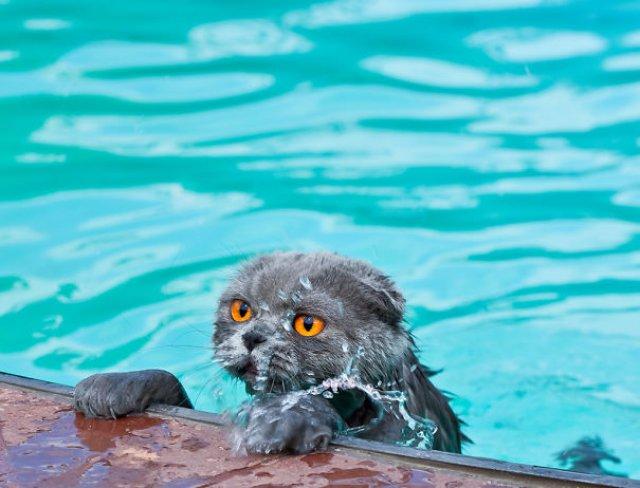 Pisici la apa, in poze haioase - Poza 6