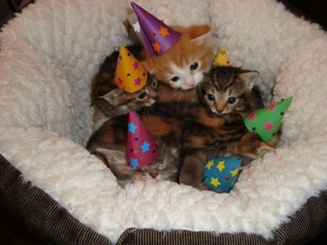 13 Pisicute care iti vor insenina ziua - Poza 8